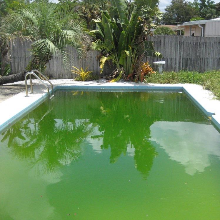 Come si debellano le alghe in piscina?